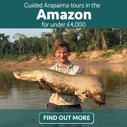 guided arapaima tours