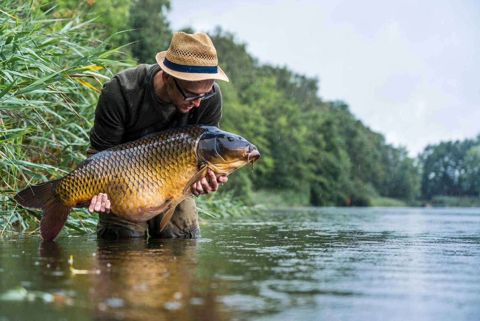 Carplantis fishing holiday, Holland