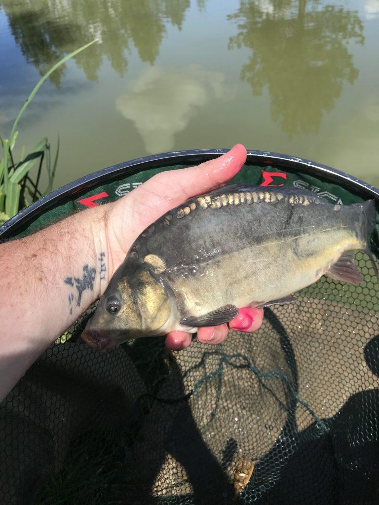 Willow Lake, Dog Lane Fishery
